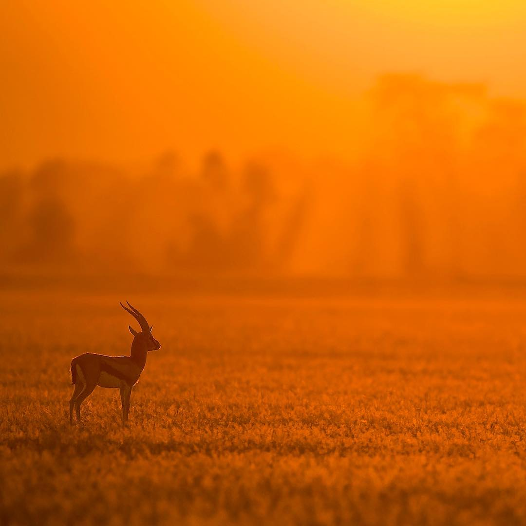 Дикая природа. Фотограф Varun Aditya