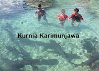 wisatawan masuk kolam hiu di karimunjawa
