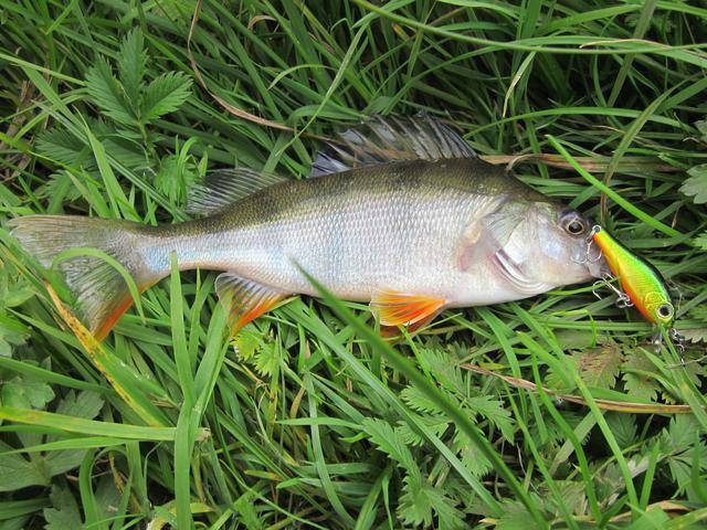 на что клюет рыба в рыбном месте