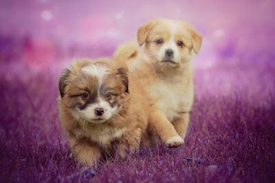 imagenes de perros tiernos, fotos fotos de perritos, fotos de peros, imagenes de perros cachorros, buenos dias perritos