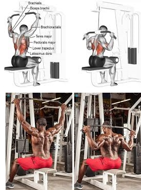 Lat Pulldown Exercise: A Back Sculpter