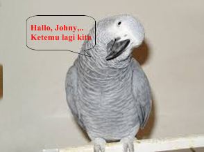 Burung Beo Takkan Ingkar Janji