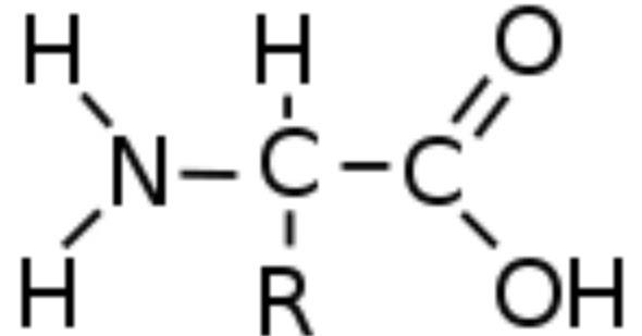 Rumus Kimia Asam Amino Rumus Kimia