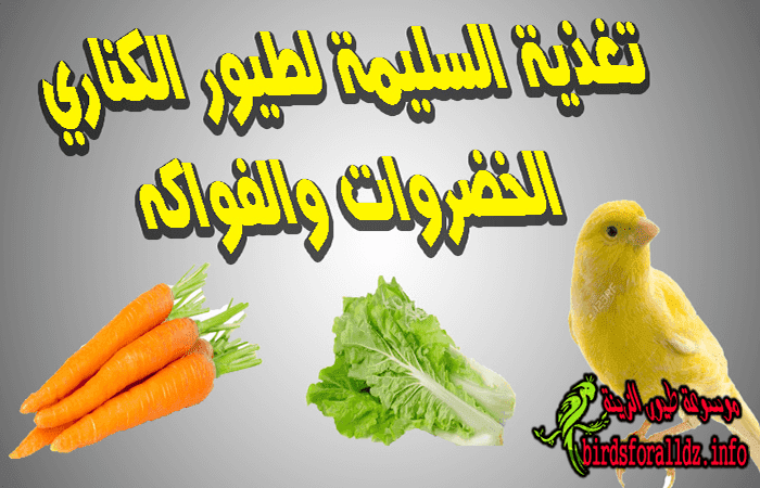 طعام طيور الكناري الخضروات والفواكه موسوعة طيور الزينة