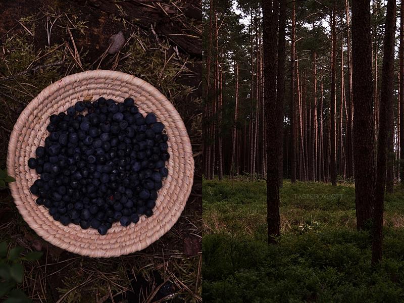 Blaubeeren/ Heidelbeeren pflücken im Juli im Wald Fotostory Fotografie dark and moody