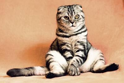 cara mengusir kucing liar dari rumah, cara mengusir kucing kampung, kucing berantem, cara mengusir kucing berak (bab) dan kencing sembarangan