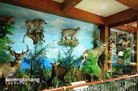 rahmat international wildlife museum