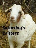 http://viewingnaturewitheileen.blogspot.fi/2014/02/saturdays-critters-9.html