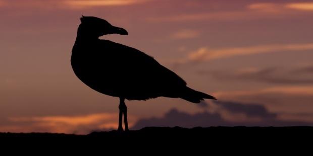 Karga Kuş Hayvanlar
