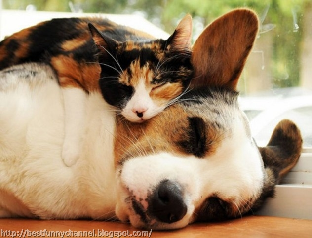 Sleeping cat and dog.