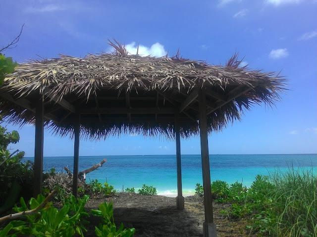 Widok na plażę na Grand Bahama