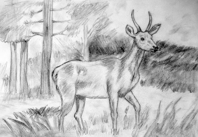 Sketch of a Deer