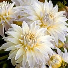 Tranh son dau so hoa tai Gia Thuy