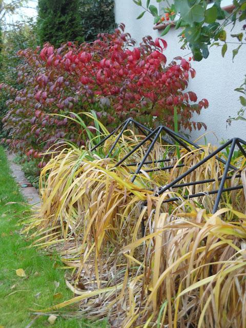 trzmielina oskrzydlona jesienią i liliowce
