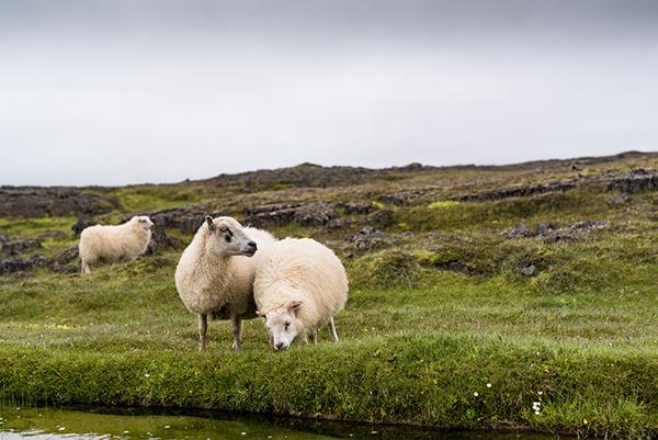 Viaje-a-Islandia-somos-designers