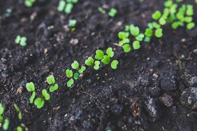 Meio Ambiente no Sesc:  oficinas sobre PANCs, fitoterapia, mudas de hortaliças e fibra de bananeira