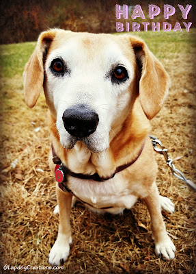 birthday dog senior rescue adopt hound