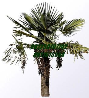 windmill jasa tukang taman surabaya