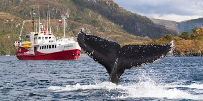 Sea voyages around Punta Arenas, Chile.