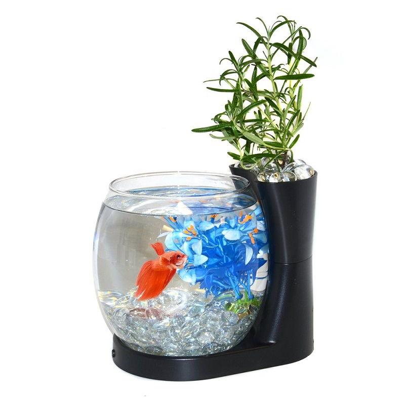 Image Whispered Betta Fish Tank Amazon Secrets