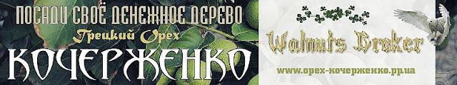 Купить саженцы скороплодного грецкого ореха в Украине, 0957351986, Walnuts Broker.