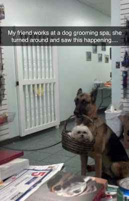 Funny Dog Humor : This is so cute