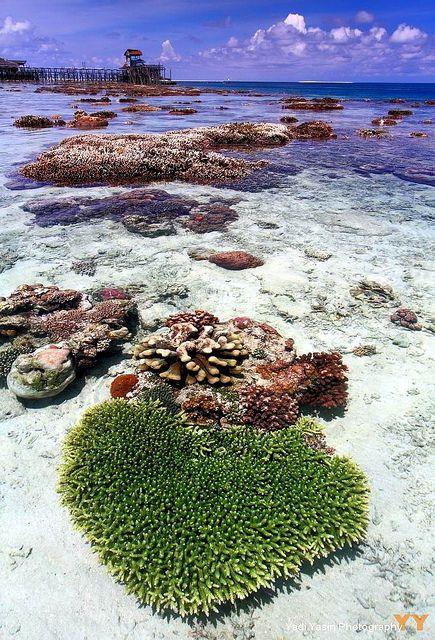 Termubu Karang Kepulauan Derawan