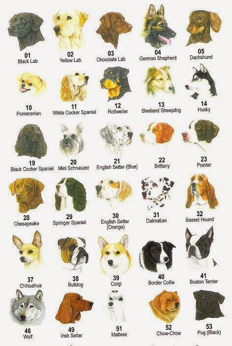 Rules Of The Jungle Different Dog Types