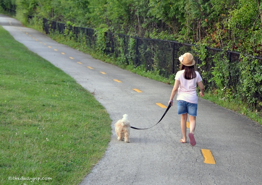 Ruby walks the trail at the Skokie Northshore Sculpture Park