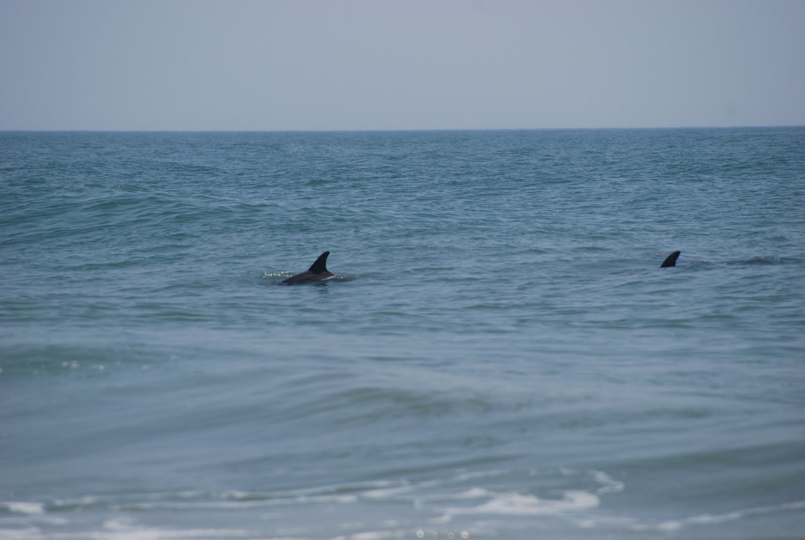 Summertime In Virginia Beach