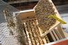 """Απίστευτο: Μελισσοκόμος έφτιαξε κυψέλη νέας """"τεχνολογίας"""" δείτε που βάζουν το μέλι έτοιμο..."""