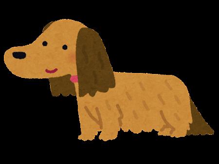 ダックスフントのイラスト(犬・長毛)