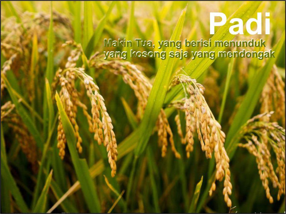 Padi Beras Dan Nasi Beserta Nama Lain Dalam Bentuk Lainnya