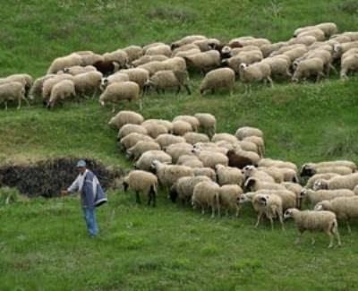 Ενημέρωση των κτηνοτρόφων για τα βοσκοτόπια στην ΠΕ Θεσπρωτίας