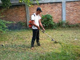 jasa pemasangan rumput gajah mini