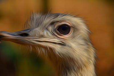 Strauss, Штраус, 施特勞斯,ostrich, autruche, στρουθοκάμηλος, struzzo,  オストリッチ, ној, struisvogel, страус, pštros, noj, devekuşu, con đà điểu, struci, ostruka,