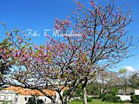 Miris proljeća, Nerežišća otok Brač slike