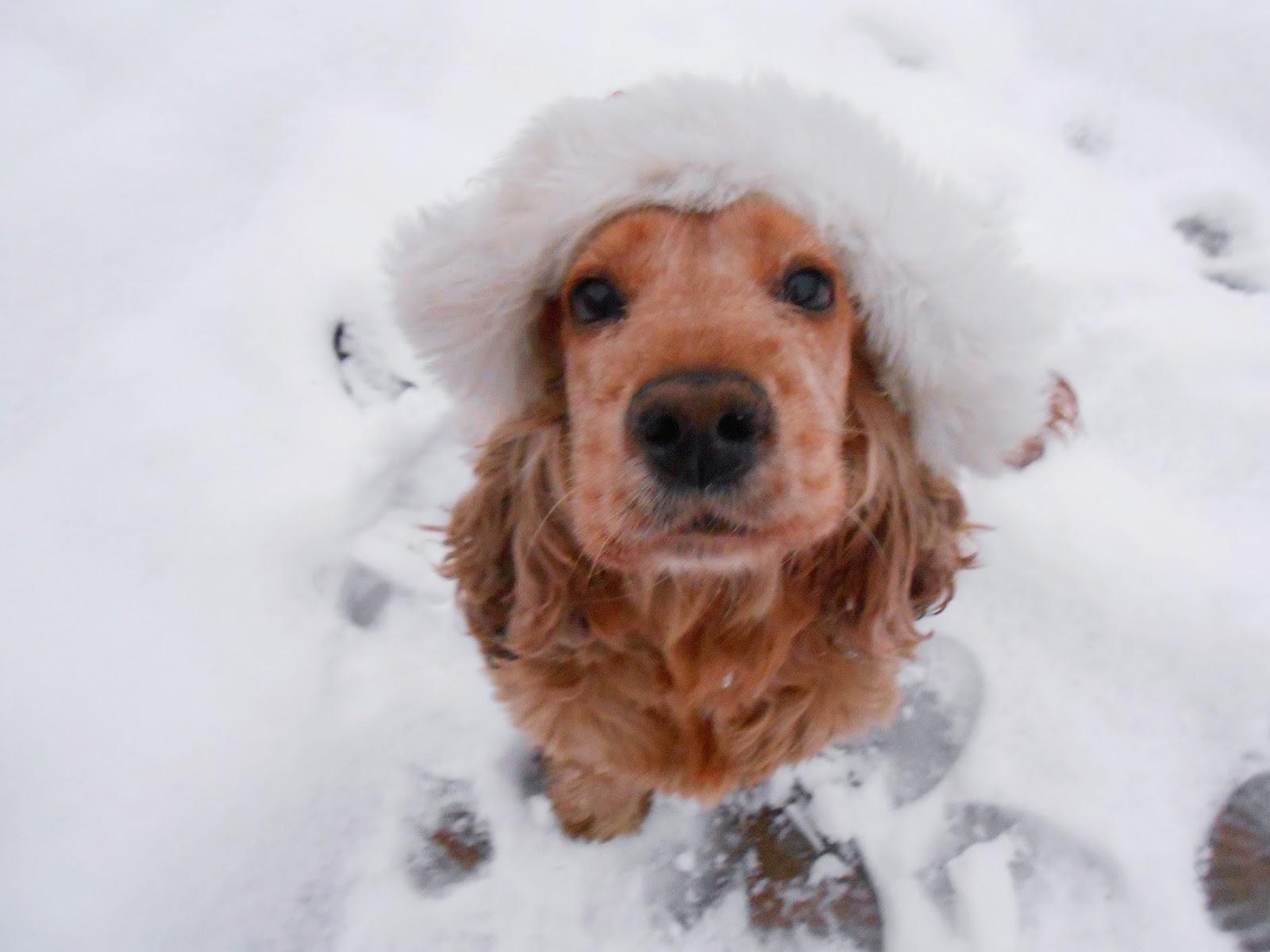 Co by było gdyby psy pisały do Św. Mikołaja? Cztery wyjątkowe listy