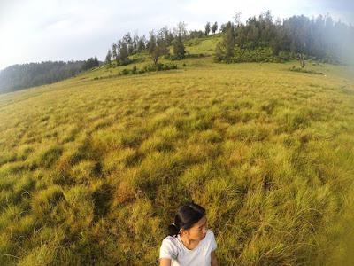 foto sabana cikasur gunung argopuro
