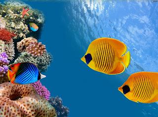Coral reef fish 17