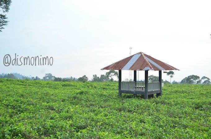 Wisata Kebun Teh Nggak Perlu Jauh-Jauh ke Bandung, di Karanganyar Juga Ada