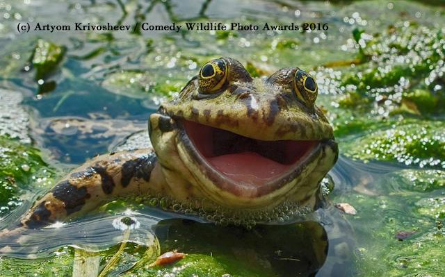 Prêmio elege a melhor foto da vida selvagem em momentos hilários