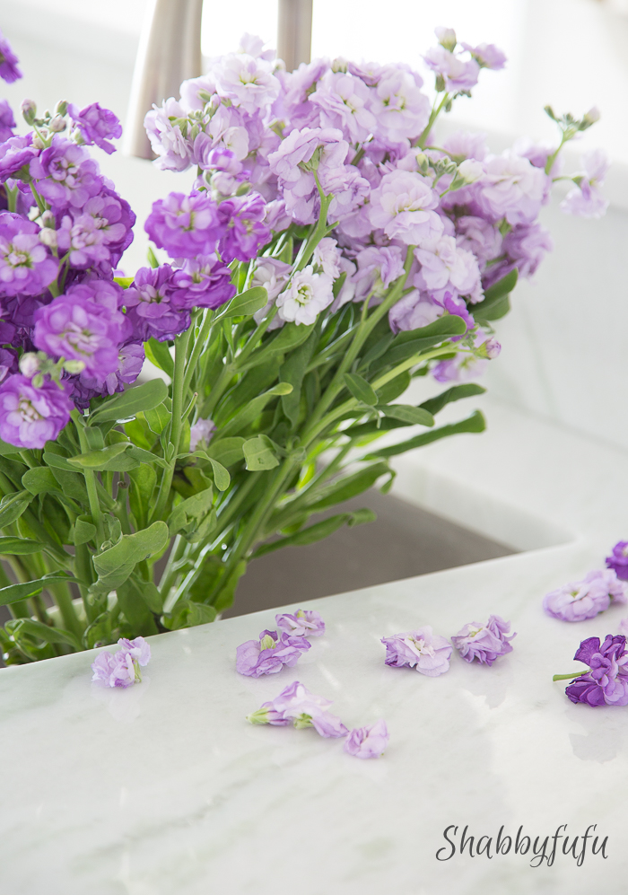 purple stock flowers in sink