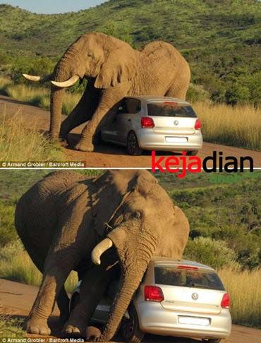 Amukan Gajah serang Mobil