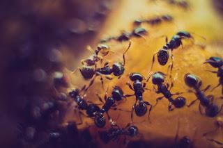 cara membasmi serangga mengganggu