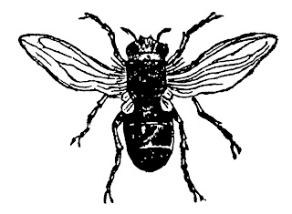 insect bug fly image digital clip art download