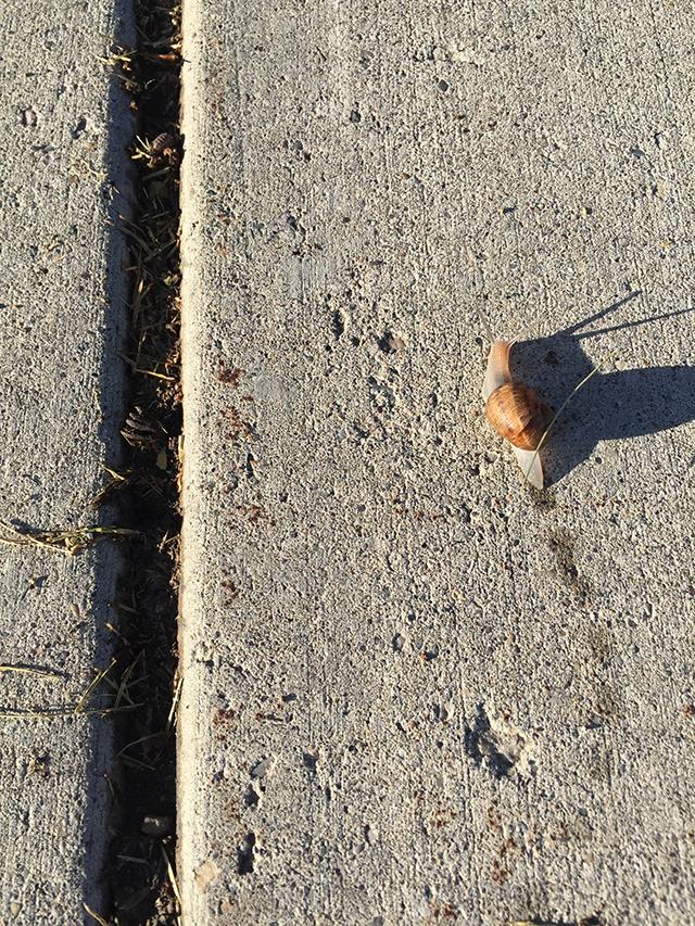 Snail leaving a trail