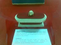 Kura kura emas peninggalan Kerajaan Kutai