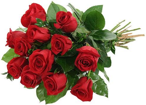 hoa gì tượng trưng cho tình yêu