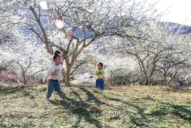 Khám phá du lịch Điện Biên mùa hoa ban